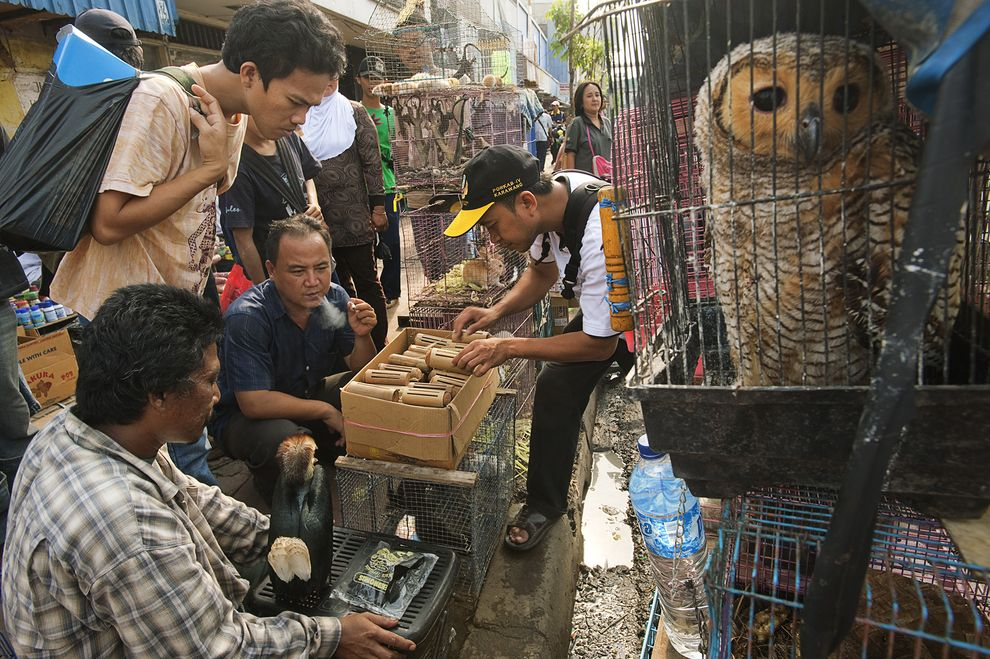 first-ever-fatwa-issued-against-wildlife-trafficking-01