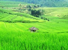 greening-indonesia